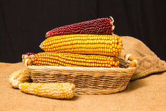 Corn cob in wicker basket Stock Images