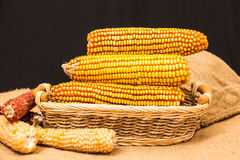 Corn cob in wicker basket Royalty Free Stock Images