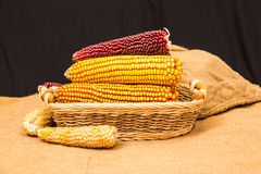 Corn cob in wicker basket Stock Photography