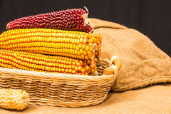 Corn cob in wicker basket Stock Image