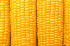 Corn Cob woith golden seed Royalty Free Stock Images