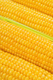 Corn Cob woith golden seed Royalty Free Stock Photography