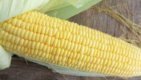 Corn and Cob Stock Image