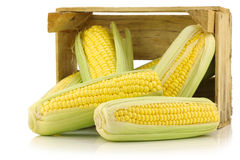 Corn on the cob in a wooden crate Royalty Free Stock Image