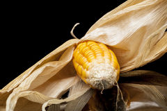 Corn, cob, yellow, decoration, still life, eleganc. Modern and uncluttered composition with copy space in studio on black background with reflections. Still life Royalty Free Stock Image