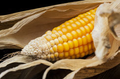 Corn, cob, yellow, decoration, still life, eleganc. Vertically aligned six ears of corn. Modern and uncluttered composition in studio on black background Stock Photo