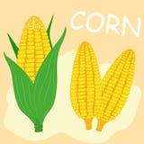 Corn cob flat. Corn cob yellow flat  n Stock Image