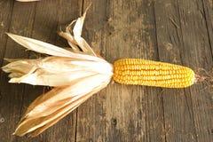 Corn cob. Yellow corn kernels Royalty Free Stock Photo