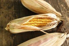Corn cob. Yellow corn kernels Royalty Free Stock Photos