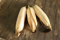 Corn cob. Yellow corn kernels Stock Photos