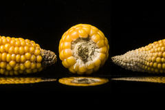 Corn, cob, yellow, ripe, copy space, food, black. Multiple views of ripe ears of corn. Closeup of golden dry corns shooting in studio on black background  with Royalty Free Stock Photo
