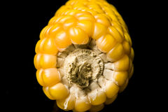 Corn, cob, yellow, ripe, grain, food, wellness, Zea mays Royalty Free Stock Images