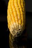 Corn, cob, yellow, ripe, grain, food, wellness, Zea mays Stock Photography