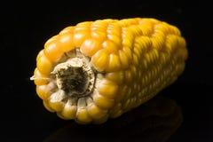 Corn, cob, yellow, ripe, grain, food, wellness, Zea mays. Single and isolated corn cob on black background Royalty Free Stock Photo