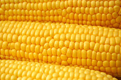 Corn on Cobb. Corn on the cobb on white background Stock Photo