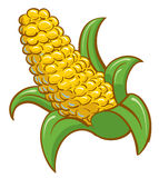 Corn on the cobb Stock Photography