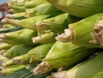 Corn Cobbs Closeup Stock Photos
