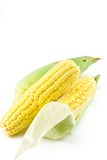 Corn cobs. On white background Royalty Free Stock Photography