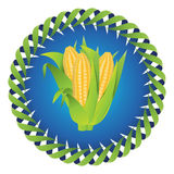 Corn cobs. Vector of corn cobs, corn kernels, green leaves Royalty Free Stock Photography