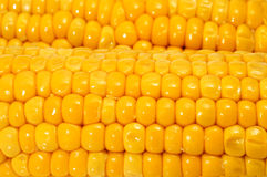 Corn cobs. Close up of some cooked corn cobs Royalty Free Stock Images