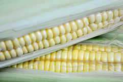 Corn cobs Stock Photography