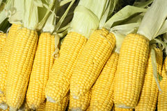 Corn cobs. The close-up of corn cobs Royalty Free Stock Photos