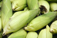 Corn cobs Royalty Free Stock Photos