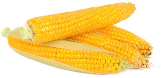 Corn on the Cobs Royalty Free Stock Photo