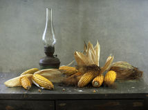 Corn-cobs Immagine Stock