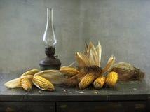 Corn-cobs Image stock