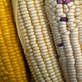 Corn cobs. For sale at a morning market Royalty Free Stock Images