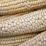 Corn cobs. For sale at a morning market Stock Photo