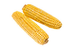 Corn cobs. Isolated over white Stock Photos