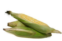 Corn cobs. Three corn cobs on white background Stock Images