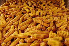 Corn cobs in a barn Royalty Free Stock Photos