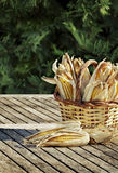Corn cobs in basket Royalty Free Stock Photos