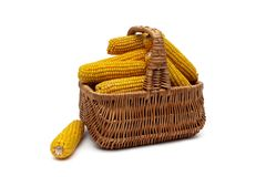 Corn cobs in a basket on a white background. Horizontal photo Stock Photography