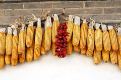 Corn cobs and chillies, China Royalty Free Stock Photos