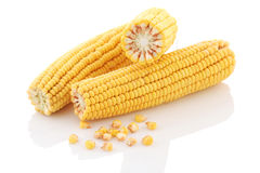 Corn cobs close-up on a white background. Royalty Free Stock Image