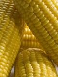 Corn cobs. Closeup of a corn cobs, fresh cut Royalty Free Stock Images