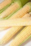 Corn cobs closeup Stock Image