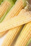Corn cobs closeup Stock Photography
