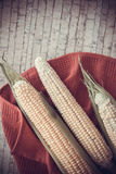 Corn cobs with copy space Royalty Free Stock Photography