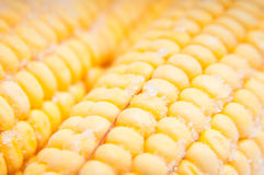 Corn cobs in detail Royalty Free Stock Photography