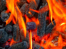 Corn cobs on fire. Corn cobs used for grilling Royalty Free Stock Photos