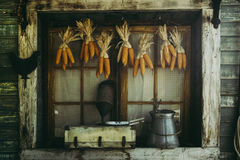 Corn cobs hanging to dry with background of the old Window. Stock Image