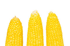 Corn cobs isolated Royalty Free Stock Photo