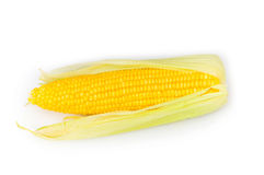 Corn cobs isolated Royalty Free Stock Images