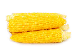 Corn cobs isolated Royalty Free Stock Photos