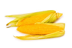 Corn cobs isolated stock photography